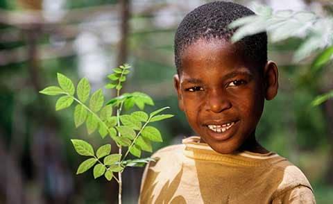 Bäume pflanzen und Wiederaufforstung der Regenwälder mit McBrikett