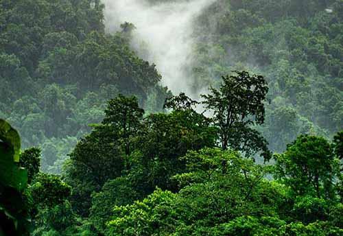 Wiederaufforstung der Regenwälder durch Bäume pflanzen mit McBrikett
