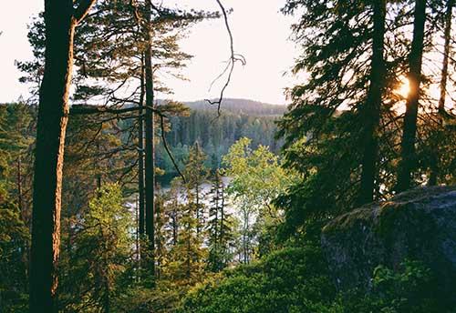 Bäume Pflanzen und Wälder aufforsten mit McBrikett